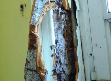 Parasites du bois, état des lieux des infestations